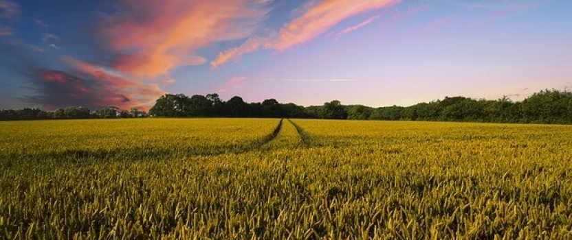 R&D Tax Credits for the Farming Industry